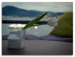 Still Life - Ready for happy hour (Miss Tebaldi) Tags: flowerspring lakeandmountains stilllife whiteflower goodtime happyhour bellaitalia outsidelounge panasoniclx100m2