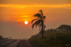IMG_S2-7423 (Max Hendel) Tags: sunrise nascerdosol sun sol amanhecer morning amanhecendo bymaxhendel bymaxhendelphotography pormaxhendel maxhendelphotography maxhendelphotostream rodoviasp225pirassunungaspbrasil beautifulsunrise highwaysp225pirassunungaspbrazil sky