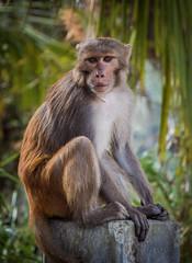 Rhesus macaque (MashrikFaiyaz) Tags: flickrunitedaward asia bangladesh southasia sundarbans nikon d5300 february spring wildlife nature natural beauty beautiful colorful monkey animal mammal travel tourism colors green background outdoor sunlight light exploration
