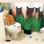 My Kitties with My Kitties Image thumbnail