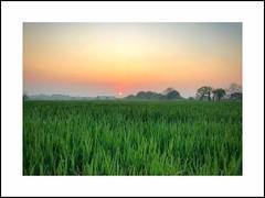Navigue en vert (G.Billon) Tags: landscape green field sunrise cameraphone iphone iphoneography breizhmabro bzh breizh bretagne saintlunaire gbillon