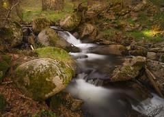 El río. (Amparo Hervella) Tags: puertodecanencia comunidaddemadrid españa spain paisaje río agua seda árbol naturaleza roca bosque largaexposición d7000 nikon nikond7000