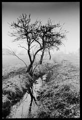Over the Stream (JamieDieu) Tags: nikon fa 35mm f25 ultramax 400 blackandwhite dramatic
