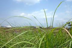 . (Out to Lunch) Tags: city limits saigon ho chi minh vietnam district 2 suburban grass sky blue fuji xh1 xf218r thanhmyloi