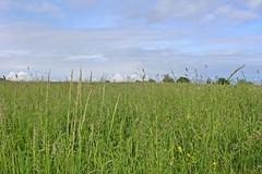 Prairie du parc Beauval