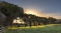 Sun block (Through Bri`s Lens) Tags: devon northdevon croyde trees sun brianspicer canon5dmk3 canon1635f4