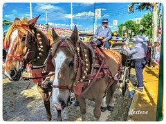 Vistas de la Feria de Sevilla. (José Luis Esteve) Tags: feria sevilla fiesta primavera sol andalucía caballos enganches