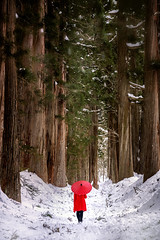 Togakushi Shrine, a girl holding a red umbrella in the pine forest of the temple. The path to Togakushi Shrine Okusha (Nagano) Japan. (pomp_jaideaw) Tags: background landscape japan nature shrine tree beautiful snow outdoor forest nagano togakushi blue green natural cold trees season day wood winter park pine japanese sky white old light big high sunny aged sunlight wet tall walk height beauty cedar girl women red umbrella people summer colorful plant travel traditional foliage