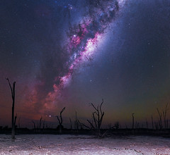 Milky Way at Yenyening Lakes - Beverley, Western Australia (inefekt69) Tags: yenyening lakes salt lake dead trees panorama stitched mosaic ms ice milky way cosmology southern hemisphere cosmos western australia dslr long exposure rural night photography nikon stars astronomy space galaxy astrophotography outdoor core great rift ancient sky 35mm d5500 landscape nikkor prime beverley wheatbelt altair jupiter