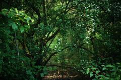 @walking path 42 (Amselchen) Tags: plants bokeh blur dof depthoffield season sony zeiss carlzeiss sonnart1855 earlysummer green forest sonnar5518za sonyilce7rm2 fe55mmf18za