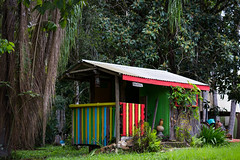 Colorful Cabin and Garden at the Rainbow Retreat in Nimbin (do_japan) Tags: nimbin australia new south wales alternative architecture art building bush cabin camp colorful community countryside forest frond garden grass green landmark landscape local nature newsouthwales old outback outdoor palm porch progressive rainbow retreat roof rural rustic sign sustainable tourism travel tree village wood