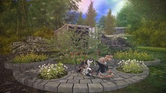 Enjoying this beautiful spring day (Rose Sternberg) Tags: second life deco decor home garden tm creation between stone área decors for versus event flowers bushes wildgrass cat dog puppies