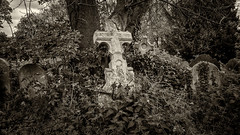 The graveyard, St Mary of Charity (Aliy) Tags: graveyard churchyard grave graves cross ruined oldgrave oldgraves gravestones gravestone overgrown faversham kent stmary stmaryofcharity