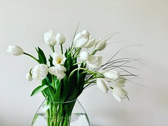 Starting the weekend with serenity (remiklitsch) Tags: iphone remiklitsch serenity zen weekend friday flowers bouquet tulips green white