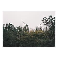 200001117-08 (csinnbeck) Tags: analog film contax rx 35mm 28 3528 fujicolor c200 fujifilm fuji t distagon denmark jutland trees contaxrx holstebro forest autumn 2018 turbine