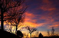 El espectáculo de la luz (portalealba) Tags: zaragoza zaragozaparque aragon españa spain sunset sol silueta ocaso portalealba canon eos1300d atardecer