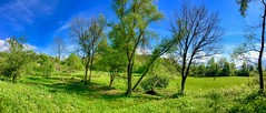 Trees and meadows near Oberaudorf, Bavaria, Germany (UweBKK (α 77 on )) Tags: tree bush meadow field grass green baum busch feld grassland panorama panoramic oberaudorf bavaria bayern germany deutschland europe europa iphone