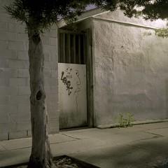 Profile (ADMurr) Tags: la eastside cartoon door tree night hasselblad 500cm 50mm zeiss distagon fuji pro 400 film 6x6 mf dba603