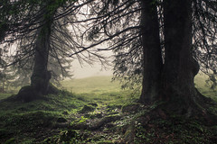 Couple Therapy (Netsrak) Tags: at alpen alps baum bavaria bayern berg bäume eu europa europe landschaft natur nebel wald fog landscape mist mountain nature woods