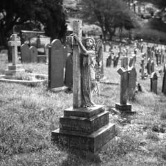 Resting Place (Howie Mudge LRPS BPE1*) Tags: graveyard angel stones gravestones stilllife mamiyac330s fomapan200creative kodakhc110 analog analogphotography bokeh tlr twinlensreflex 120film 6x6 film filmphotography filmisnotdead filmrevival filmcamera ishootfilm believeinfilm