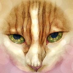 Daily #Art - Day 05-11-19 (hinxlinx) Tags: dailyart illustration pendrawing pensketch catart petart cat feline kitty neko tabbycat orangekitty vi hinxlinx ericlynxlin elynx catofinstagram instaart artofinstagram digitalart