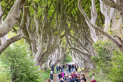Dark Hedges, Northern Irland (KronaPhoto) Tags: irland 2019 vår hbo gameofthrones tree forest darkhedges northernirland kingsroad travel tourism tourist people trees alle awesome treescape nature wooden skog