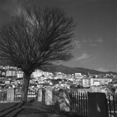 Vue over Covilhã (lebre.jaime) Tags: portugal beira covilhã vue city tree hasselblad 500cm distagon c3560 analogic film120 mf mediumformat 6x6 squareformat rollei retro80s iso80 v600 affinity affinityphoto ptbw noiretblanc bw pb