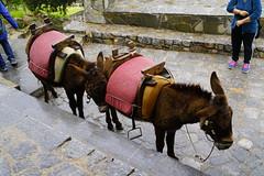 _DSC8296 (paulNming) Tags: greece medievalcityofrhodes knight'sstreet palace gothicarchitecture lindos acropolisoflindoscastles palaces 希腊 罗德岛 骑士 ,骑士街 , 林多斯 城堡 rhodes island