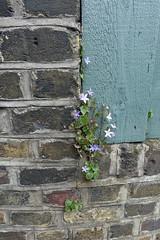 11th May 209 (themostinept) Tags: stokenewingtonchurchstreet lordshiproad london hackney n16 stokenewington brickwall paint green wood flowers plants weeds