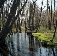 Buckow, Märkische Schweiz Brandenburg, Auwald (tessar_man) Tags: forest zeissikon suoerikontabx tessar ektar100 mediumformatfolders brandenburg buckow
