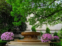 springtime at the National Gallery (ekelly80) Tags: dc washingtondc april2019 spring nationalgallery flowers azaleas purple trees green fountains