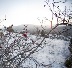 8419792208_0a914bef07_h (z®[]) Tags: neve freddo snow cold tuscany nikon 50mm nikkor50f14 d3s naturelover nature myworld staycurious casentino