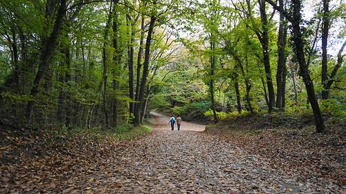 Autumn at the Arboretum of Ataturk. İstanbul, Turkey