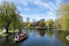Boston Public Garden (yarnim) Tags: boston massachusetts swanboat water pond lake sky landscape relaxed bostonpublicgarden park sony a7iii a7m3 ilce7m3 sel24105g 24105mm zoomlens cloud spring