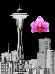Seattle (Taymaz Valley) Tags: