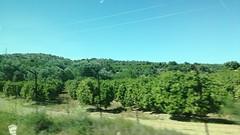 Naranjos de Peñaflor, Sevilla (Benny de Pino Montano) Tags: vegetación naranjos agricultura andalucía españa peñaflor sevilla herbage orange tree farming spain seville