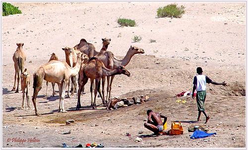 vers Djibouti  .....  point d'eau