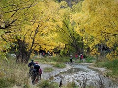 Autumn at the Arrow River (SM Tham) Tags: newzealand southisland arrowtown arrowriver fall autumn trees foliage leaves creek people landscape yellow