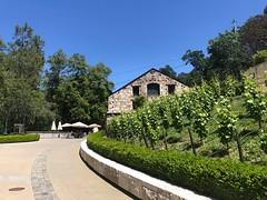 Buena Vista winery (elena_photos) Tags: buenavista winery grapes california sonoma