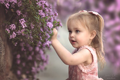 Little Bloomer ({jessica drossin}) Tags: jessicadrossin blooms flowers spring toddler girl child kid picking cute discovery wwwjessicadrossincom purple pink natural light
