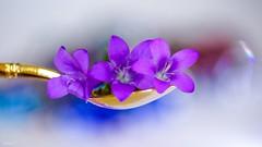 "A spoonful - 6786 (✵ΨᗩSᗰIᘉᗴ HᗴᘉS✵63 000 000 THXS) Tags: ""aspoonful"" spoonful macro macromondays bokeh sony hensyasmine flower flora purple gold aspoonful"