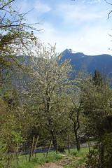 Hike around Pointe de Chenevier (*_*) Tags: bornes 2019 printemps spring april pointedechenevier sourcesdulacdannecy savoie europe france hautesavoie 74 annecy hiking mountain montagne nature randonnee walk marche afternoon faverges