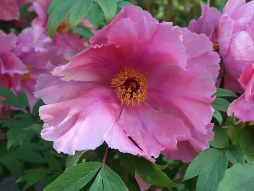 Botanic Garden 052c