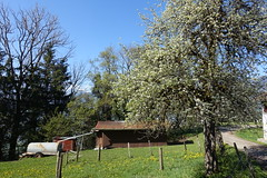 Le Coux @ Hike to Mont Orchez (*_*) Tags: spring printemps 2019 morning matin europe france hautesavoie 74 hiking mountain montagne nature randonnee walk marche montorchez may savoie marignier chablais