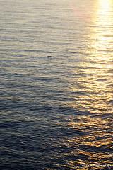 Море на закате (tatianatorgonskaya) Tags: черногория будва општинабудва достопримечательностибудва чтопосмотретьвчерногории чтопосетитьвчерногории блог блогочерногории блогопутешествиях блогожизнизарубежом балканы европа путешествие crnagora montenegro budva balkans balkanstravel balkan europe travel адриатика адриатикавчерногории адриатическоеморе море adriatic adriaticsea sea