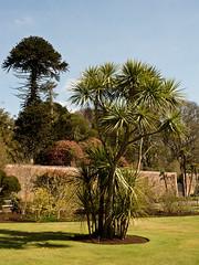 mull of galloway logan botanic garden-4131535 (E.........'s Diary) Tags: eddie ross olympus omd em5 mark ii spring 2019 logan botanic garden mull galloway dumfries
