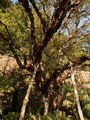 mull of galloway logan botanic garden-4131524 (E.........'s Diary) Tags: eddie ross olympus omd em5 mark ii spring 2019 logan botanic garden mull galloway dumfries