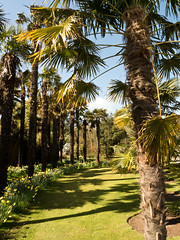 mull of galloway logan botanic garden-4131510 (E.........'s Diary) Tags: eddie ross olympus omd em5 mark ii spring 2019 logan botanic garden mull galloway dumfries