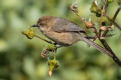 Dinner Time (Daren Grilley) Tags: santa barbara marsh bird birds