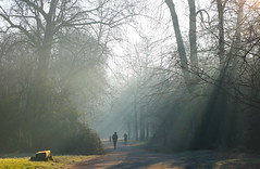 Winter morning at Paris (pascal445) Tags: paris france travel europe paysage landscape outdoor rayon light lightning sunbeam wood bois forest silhouette ombre shadow parc park jardin trees arbres sun morning matin hiver winter outside